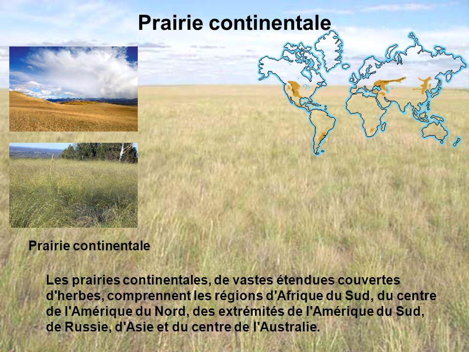 Prairie continentale