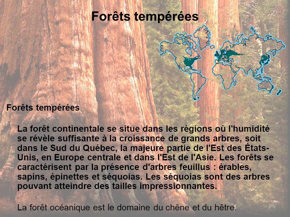 Forêts tempérées