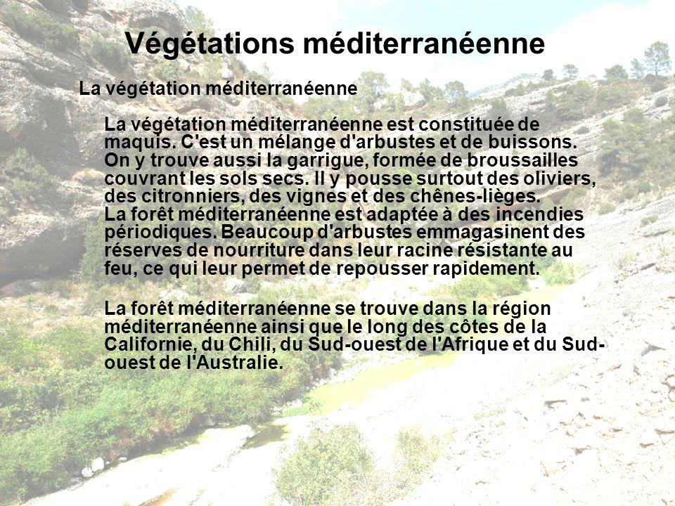 Végétations méditerranéenne