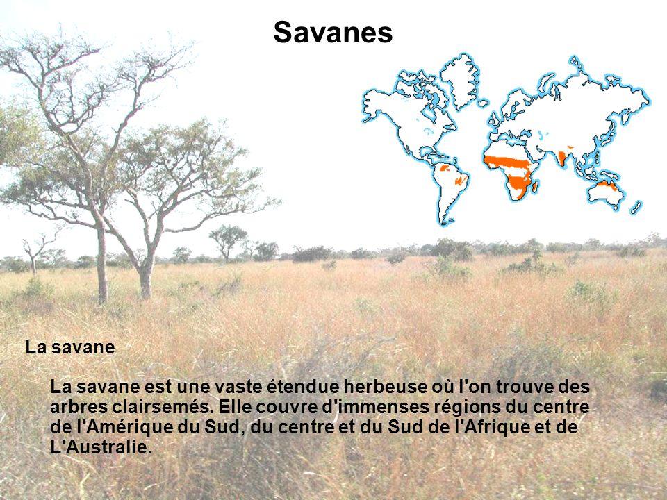 Savanes