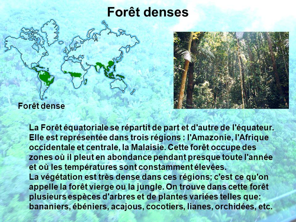 Forêt denses