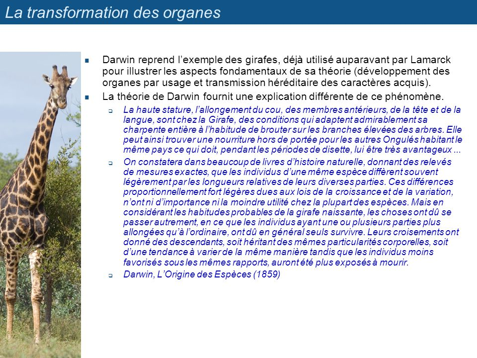 La transformation des organes