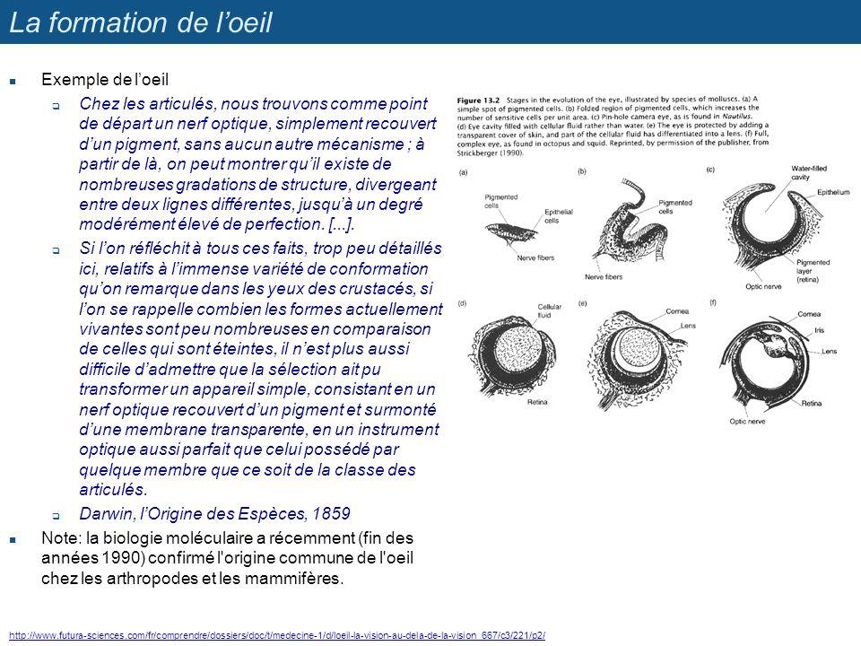 La formation de l'oeil Exemple de l'oeil