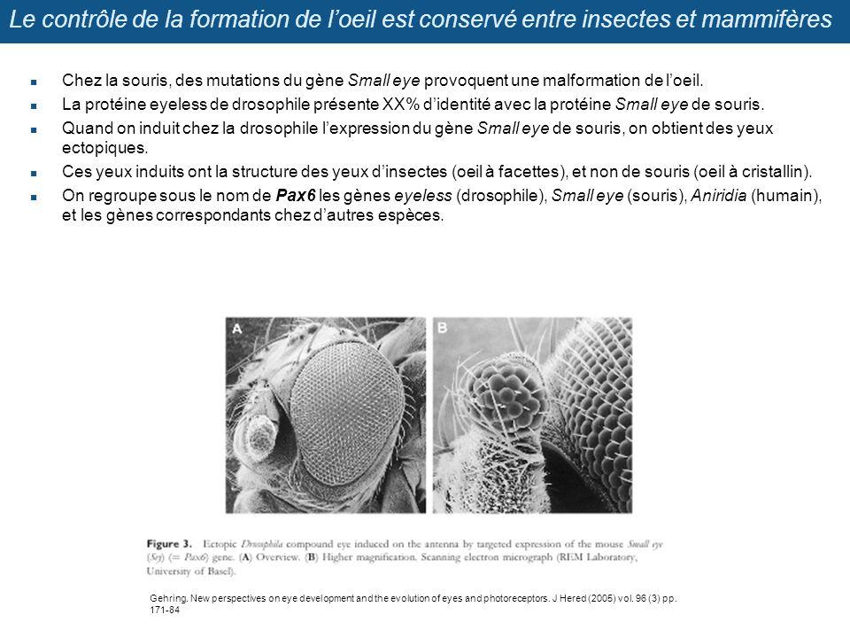 Le contrôle de la formation de l'oeil est conservé entre insectes et mammifères