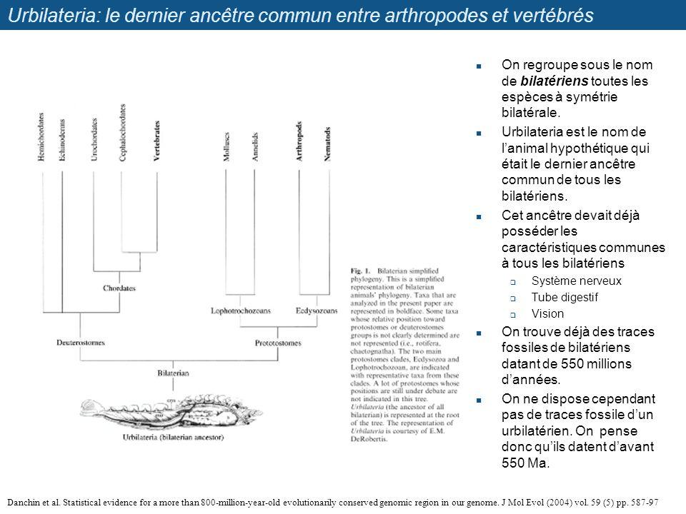 Urbilateria: le dernier ancêtre commun entre arthropodes et vertébrés