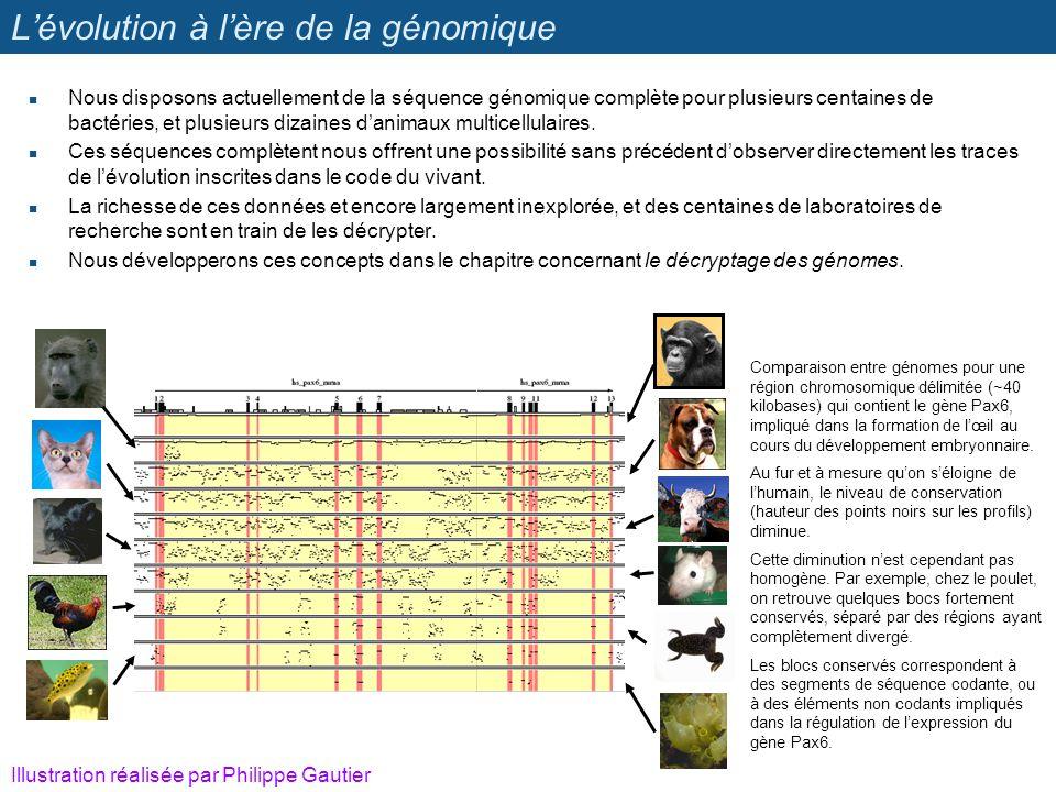 L'évolution à l'ère de la génomique