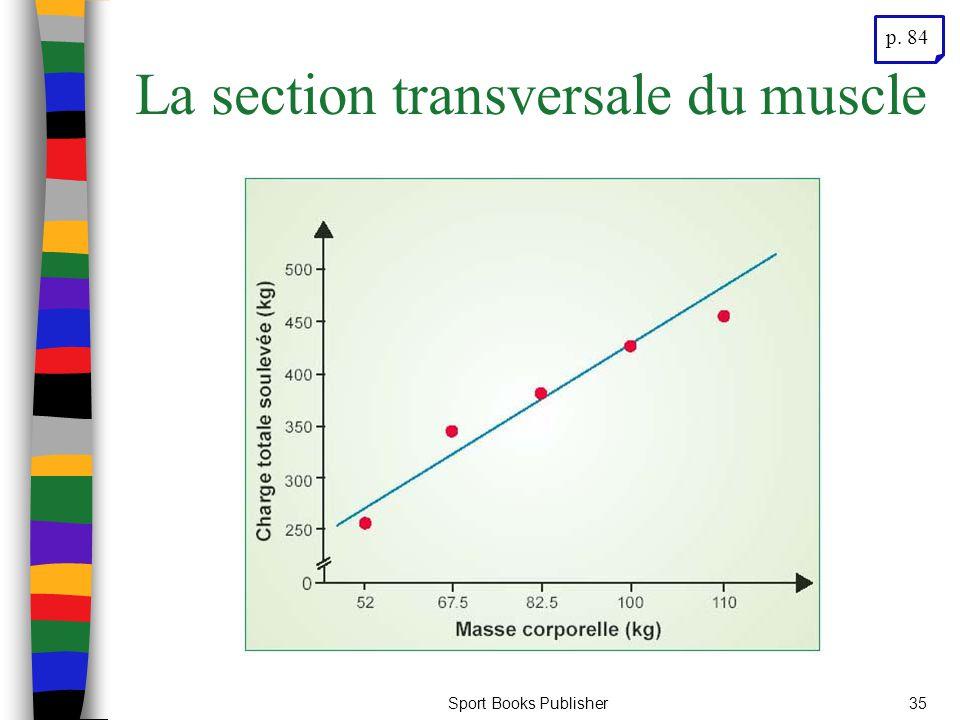 La section transversale du muscle