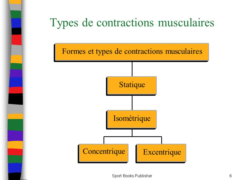 Types de contractions musculaires
