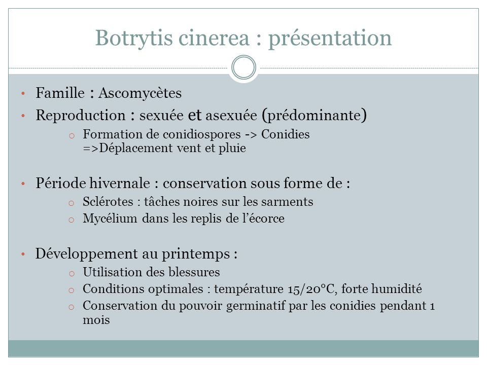 Botrytis cinerea : présentation
