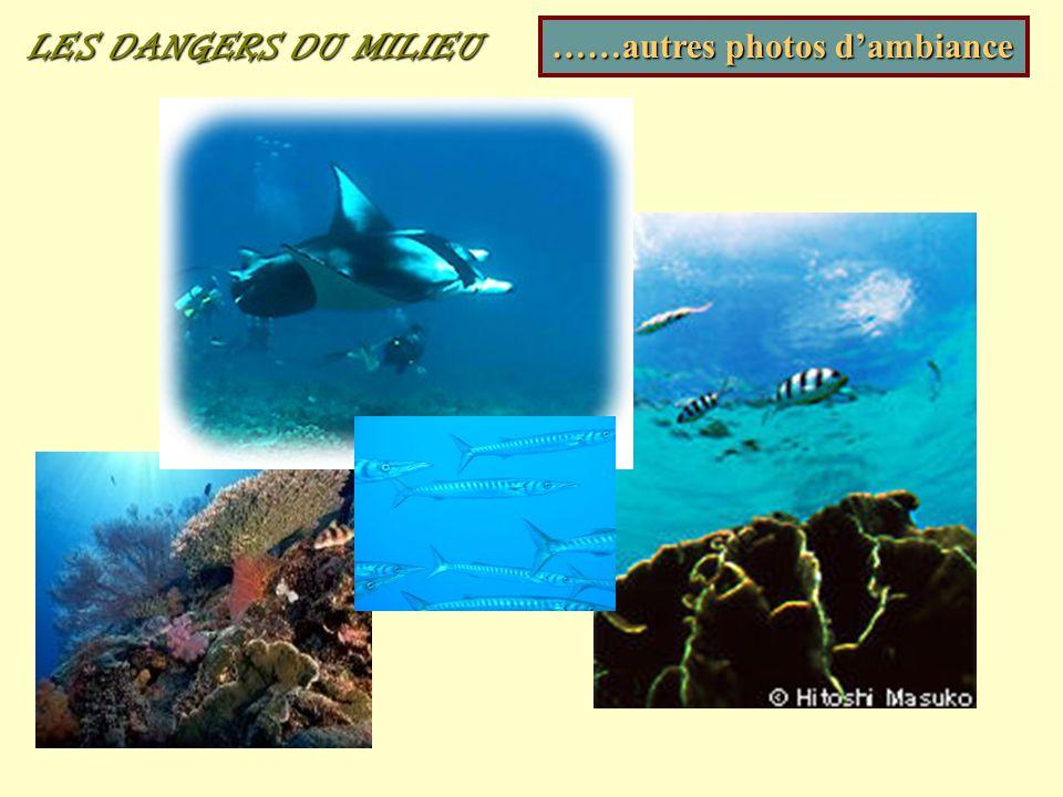 LES DANGERS DU MILIEU ……autres photos d'ambiance