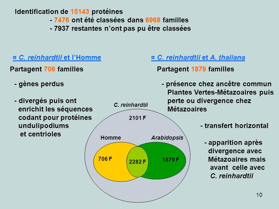 Identification de 15143 protéines