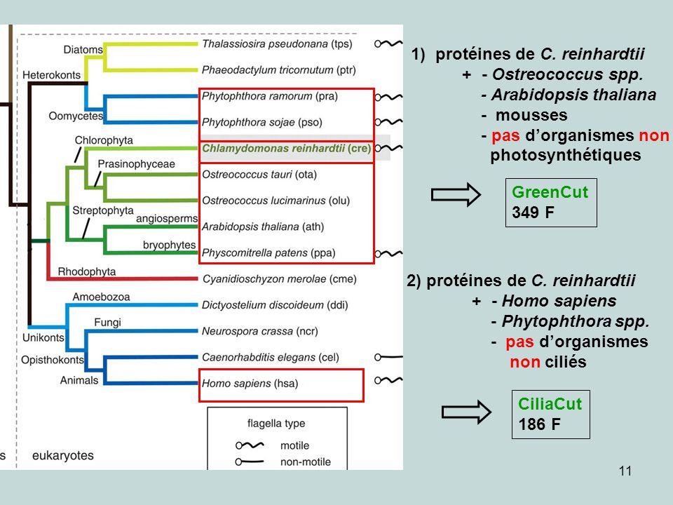 1) protéines de C. reinhardtii