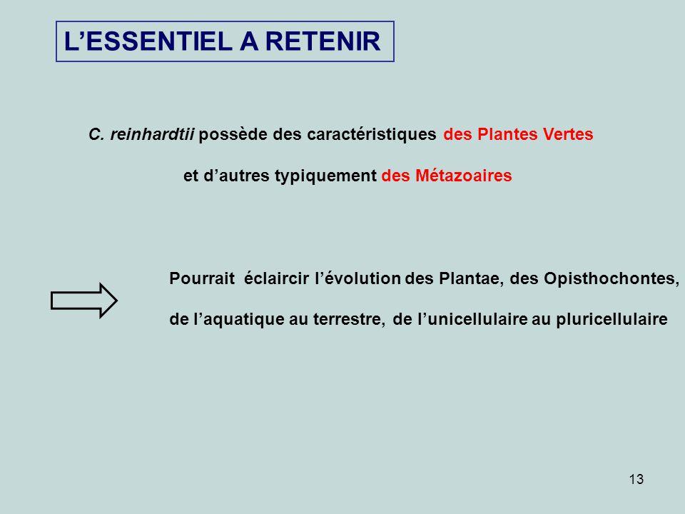 L'ESSENTIEL A RETENIR C. reinhardtii possède des caractéristiques des Plantes Vertes. et d'autres typiquement des Métazoaires.