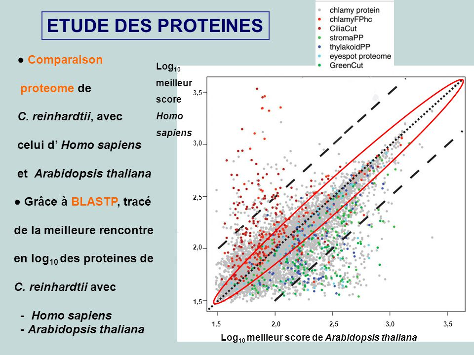 ETUDE DES PROTEINES ● Comparaison proteome de C. reinhardtii, avec