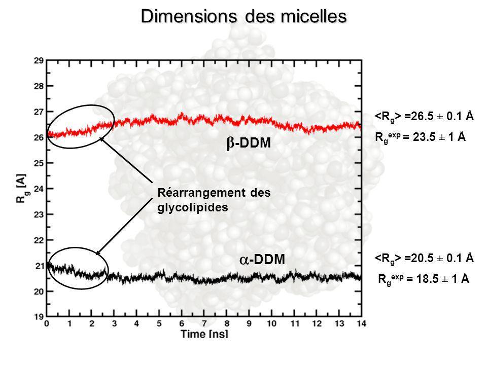 Dimensions des micelles