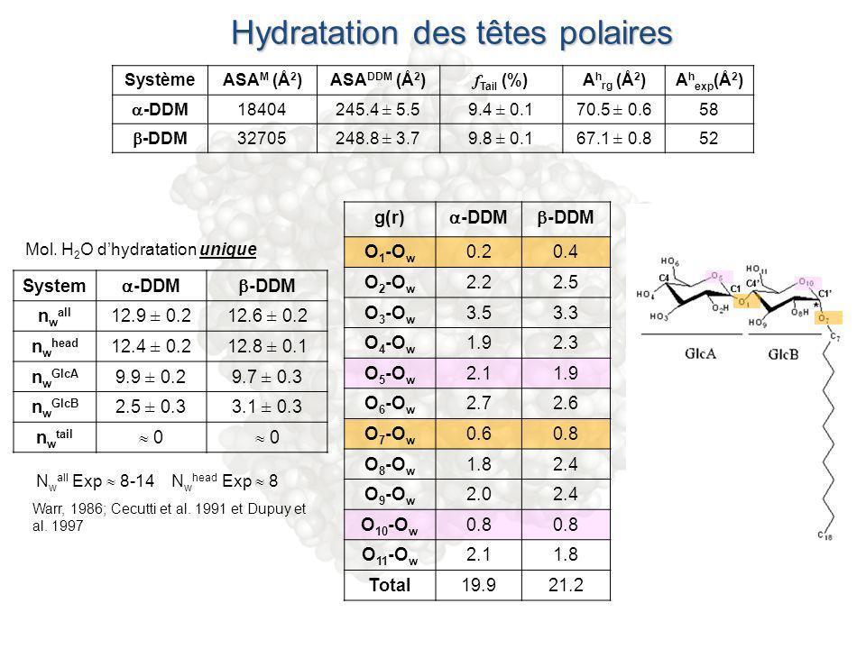 Hydratation des têtes polaires