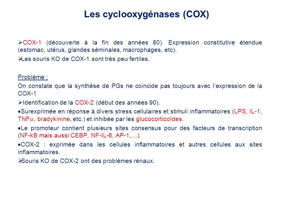 Les cyclooxygénases (COX)