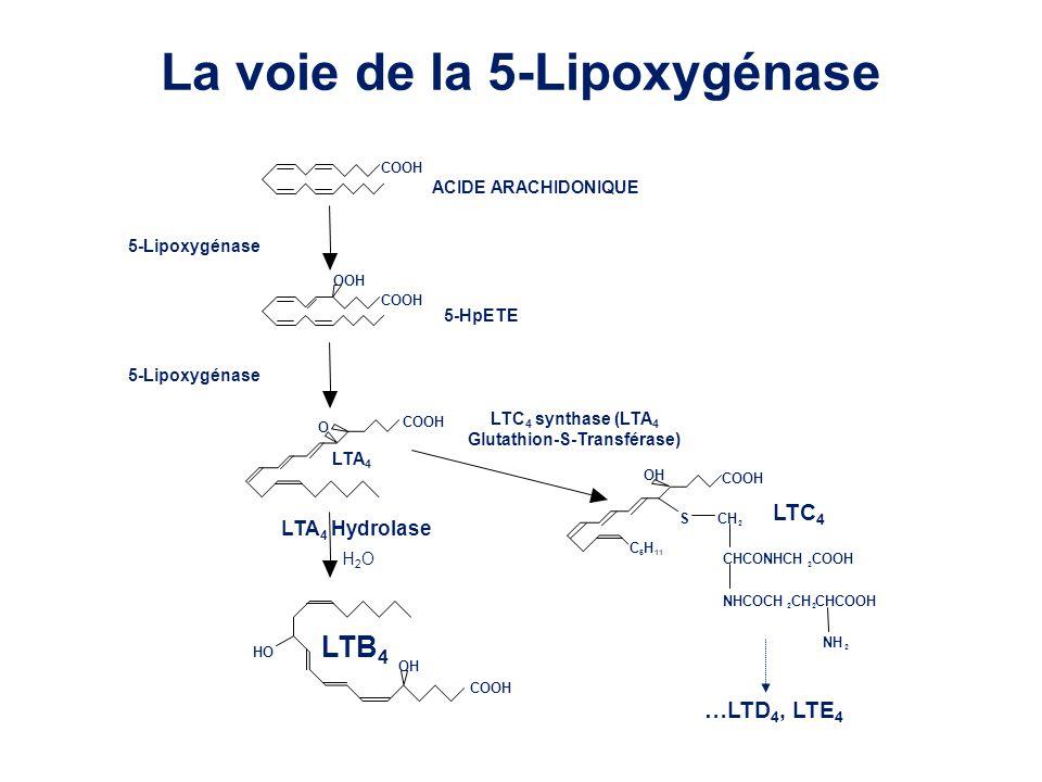 Glutathion-S-Transférase)