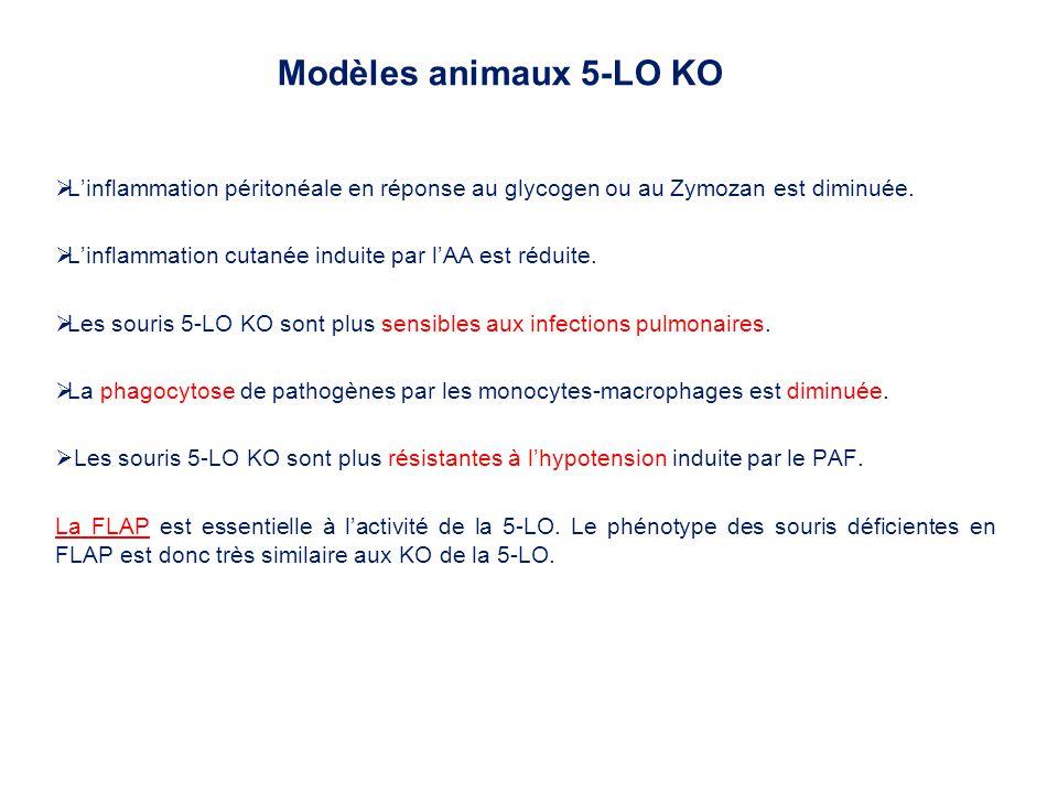 Modèles animaux 5-LO KO L'inflammation péritonéale en réponse au glycogen ou au Zymozan est diminuée.