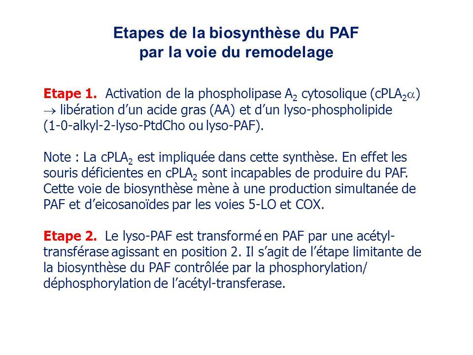 Etapes de la biosynthèse du PAF par la voie du remodelage