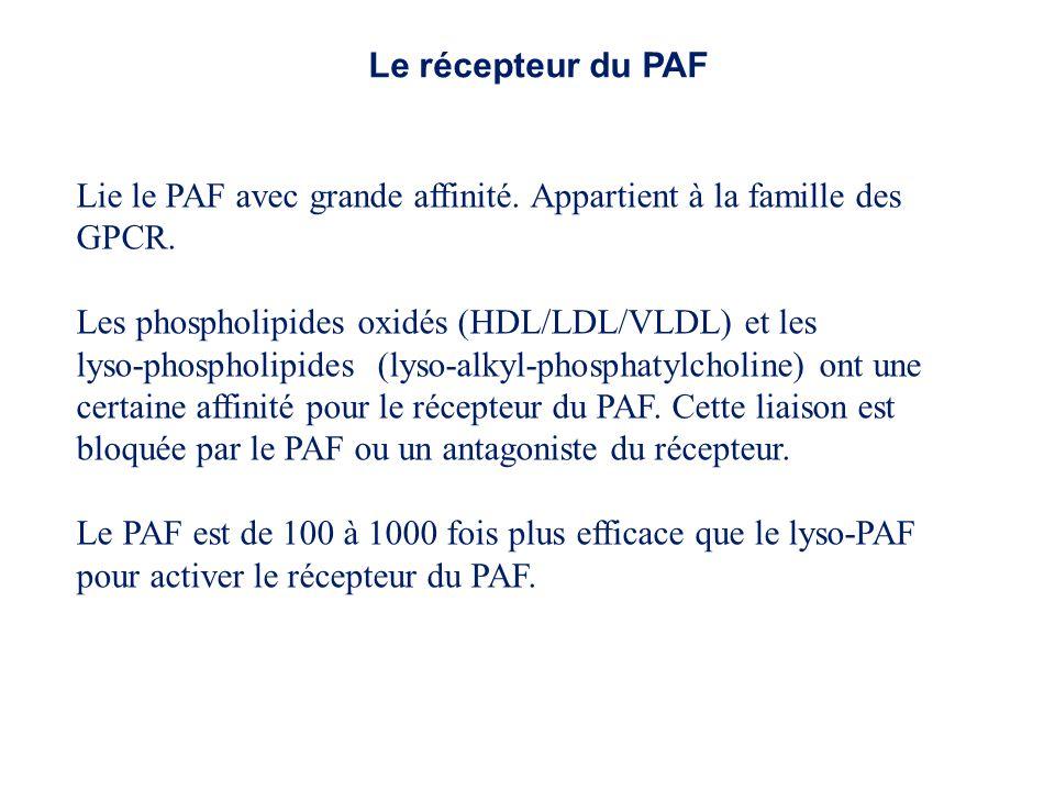 Le récepteur du PAF Lie le PAF avec grande affinité. Appartient à la famille des GPCR. Les phospholipides oxidés (HDL/LDL/VLDL) et les.