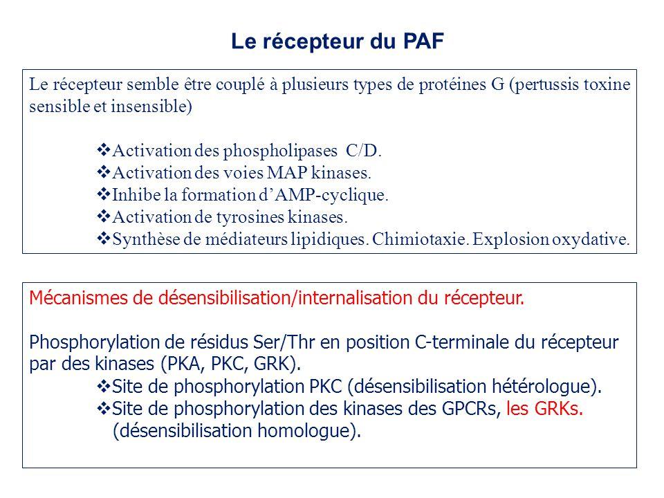 Le récepteur du PAF Le récepteur semble être couplé à plusieurs types de protéines G (pertussis toxine sensible et insensible)