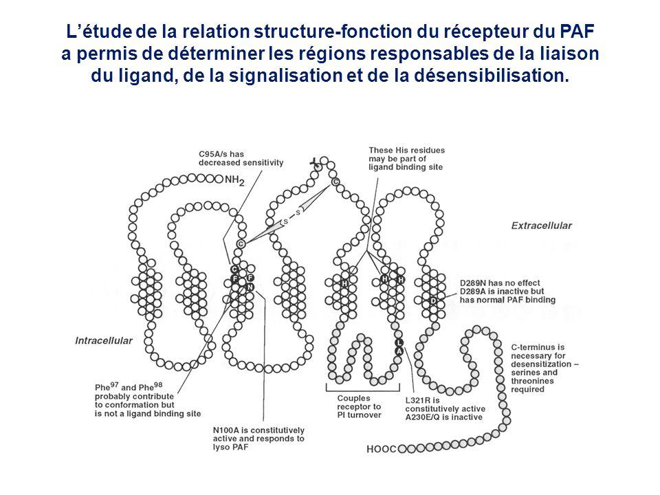 L'étude de la relation structure-fonction du récepteur du PAF