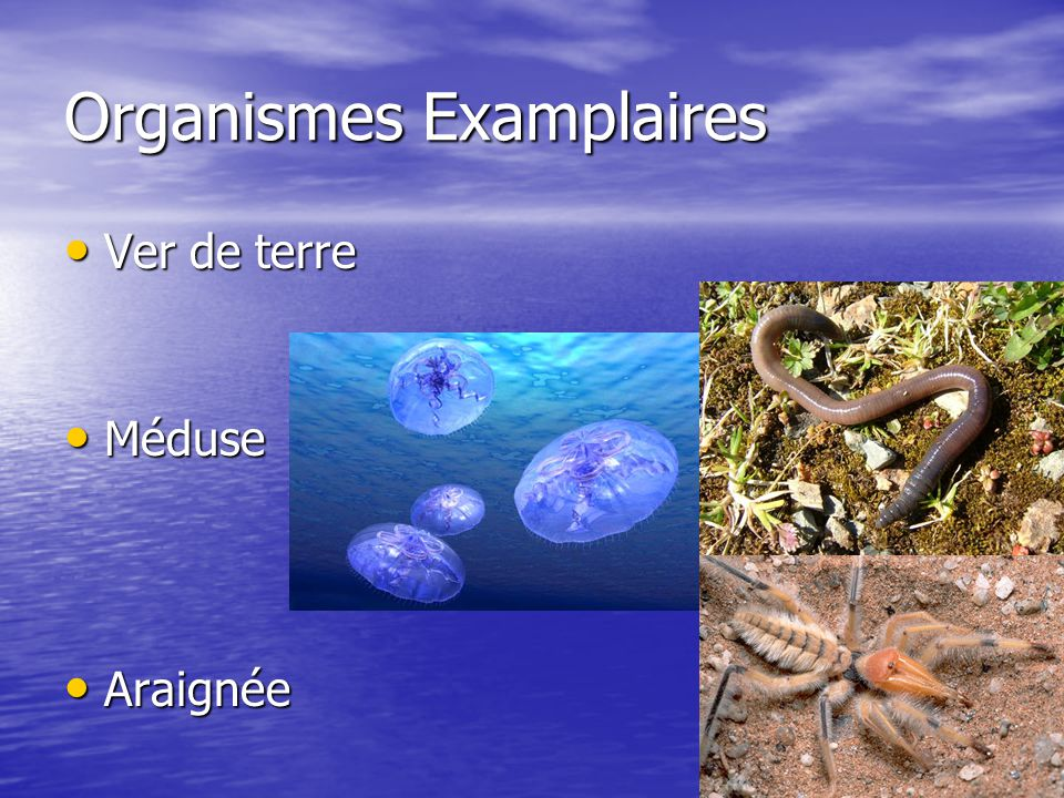 Organismes Examplaires