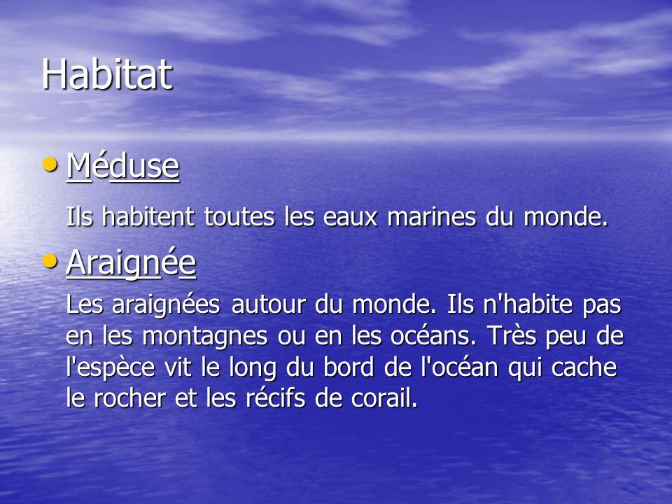 Habitat Méduse Ils habitent toutes les eaux marines du monde. Araignée