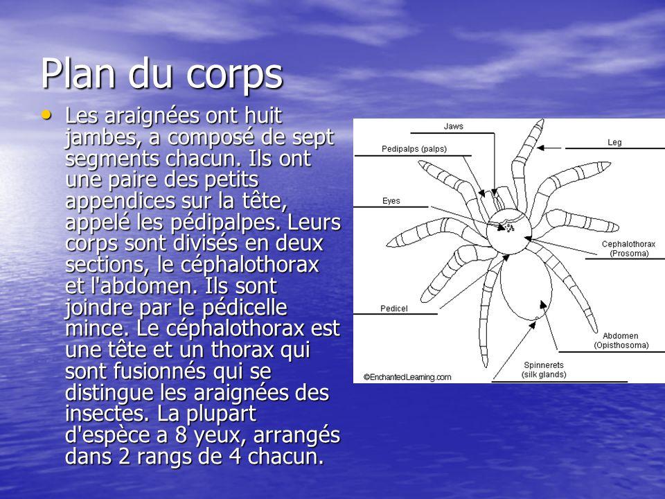 Plan du corps