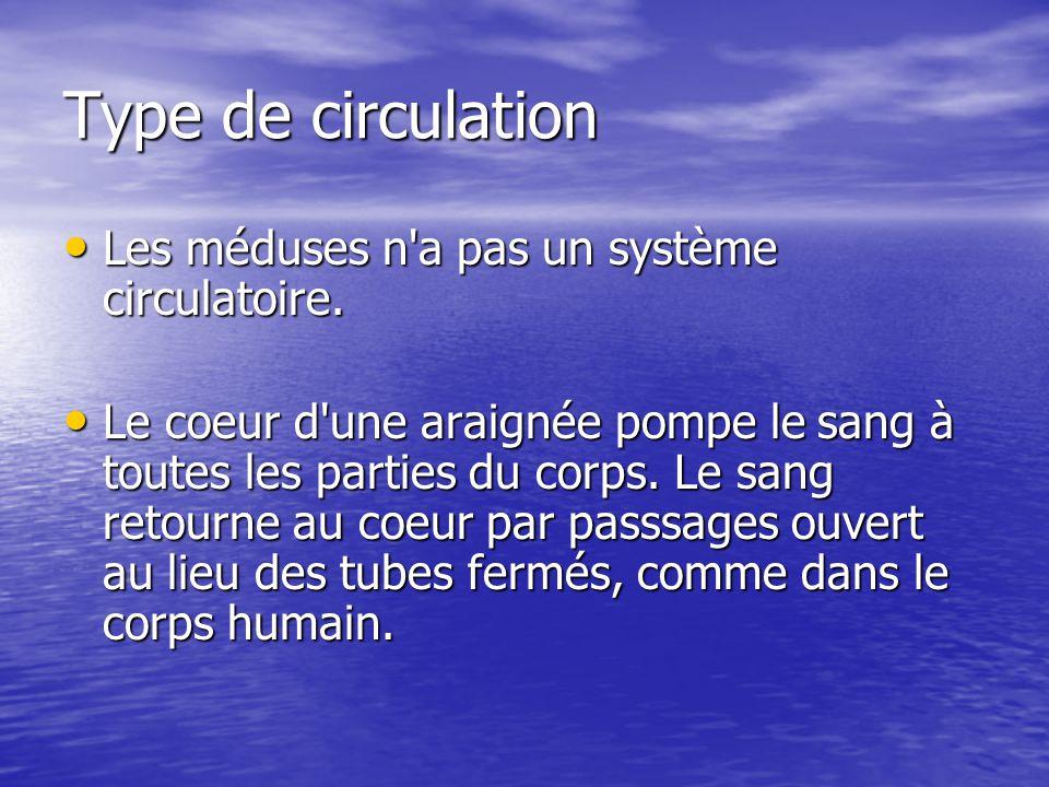 Type de circulation Les méduses n a pas un système circulatoire.