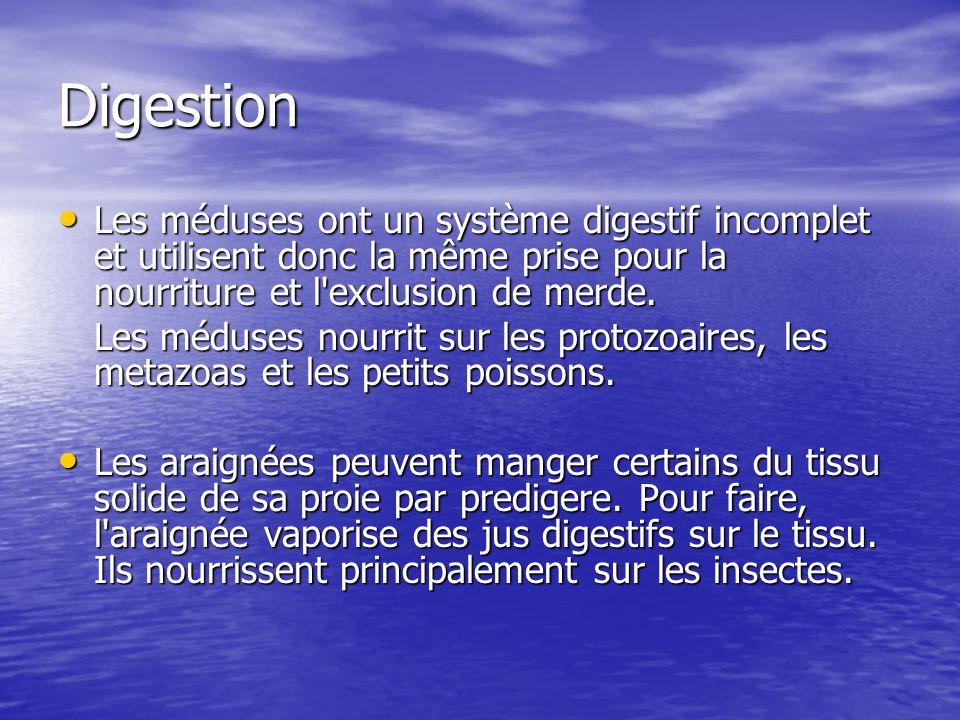 Digestion Les méduses ont un système digestif incomplet et utilisent donc la même prise pour la nourriture et l exclusion de merde.
