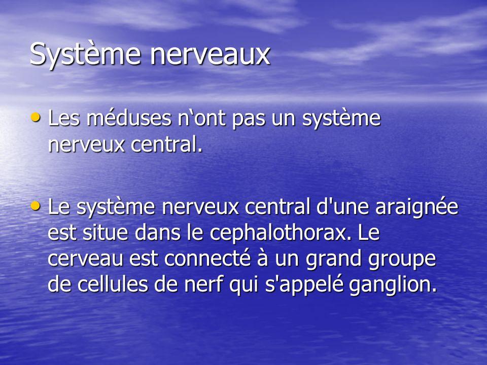 Système nerveaux Les méduses n'ont pas un système nerveux central.
