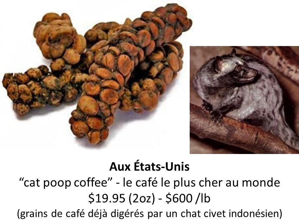 Aux États-Unis cat poop coffee - le café le plus cher au monde $19.95 (2oz) - $600 /lb (grains de café déjà digérés par un chat civet indonésien)