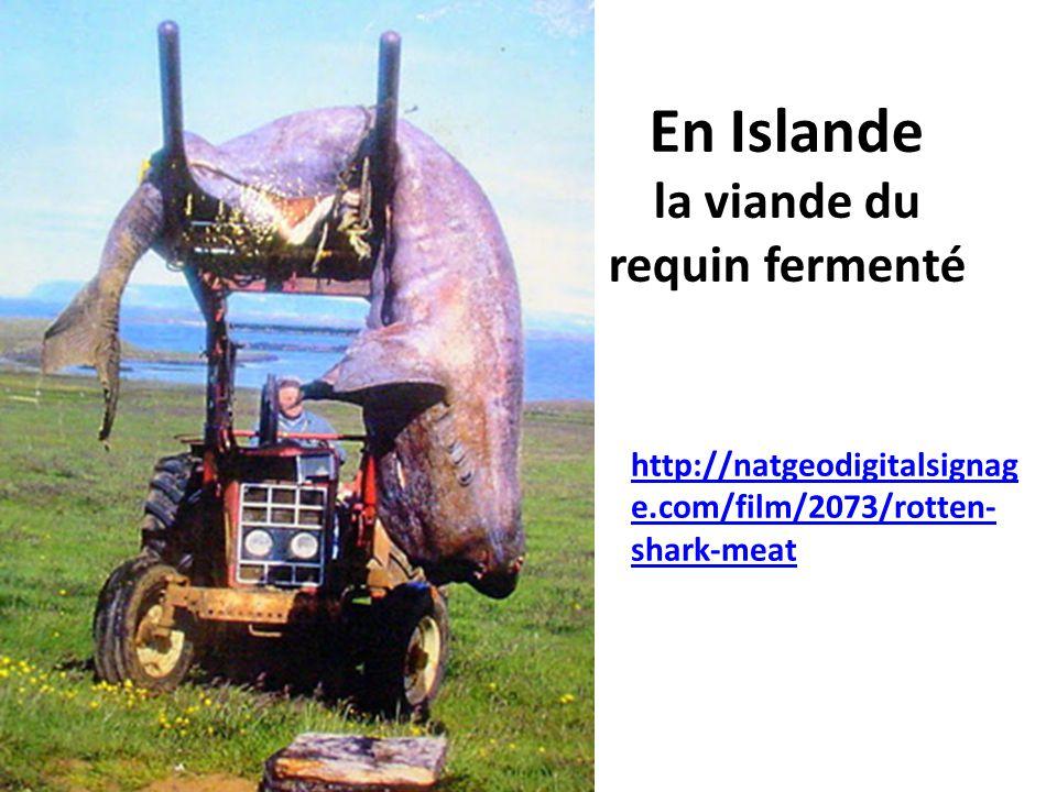 En Islande la viande du requin fermenté