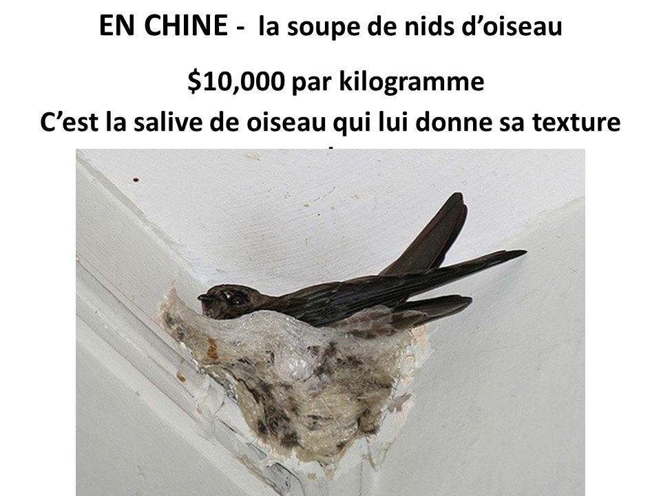 EN CHINE - la soupe de nids d'oiseau $10,000 par kilogramme C'est la salive de oiseau qui lui donne sa texture !