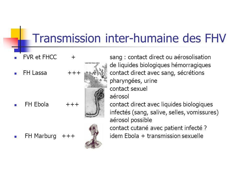 Transmission inter-humaine des FHV