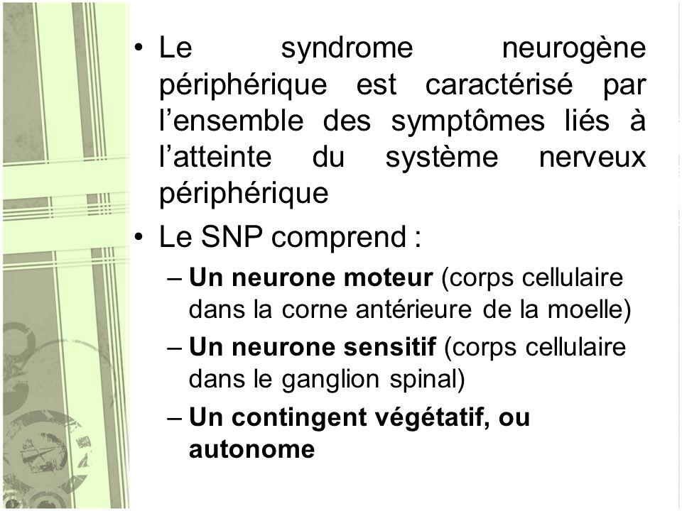Le syndrome neurogène périphérique est caractérisé par l'ensemble des symptômes liés à l'atteinte du système nerveux périphérique