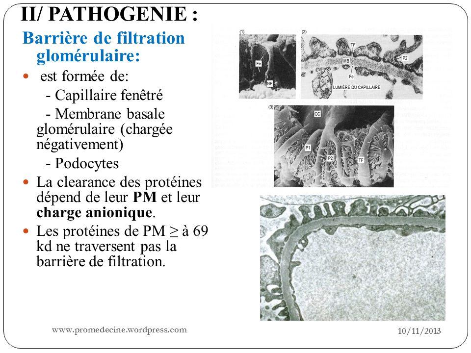 II/ PATHOGENIE : Barrière de filtration glomérulaire: est formée de: