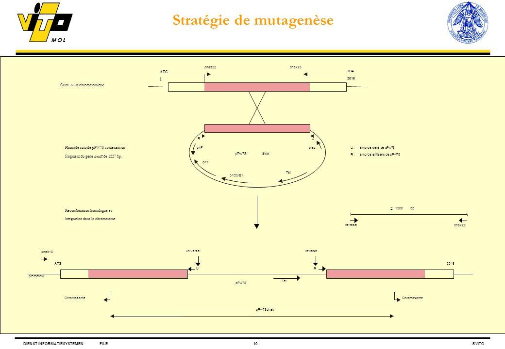Stratégie de mutagenèse
