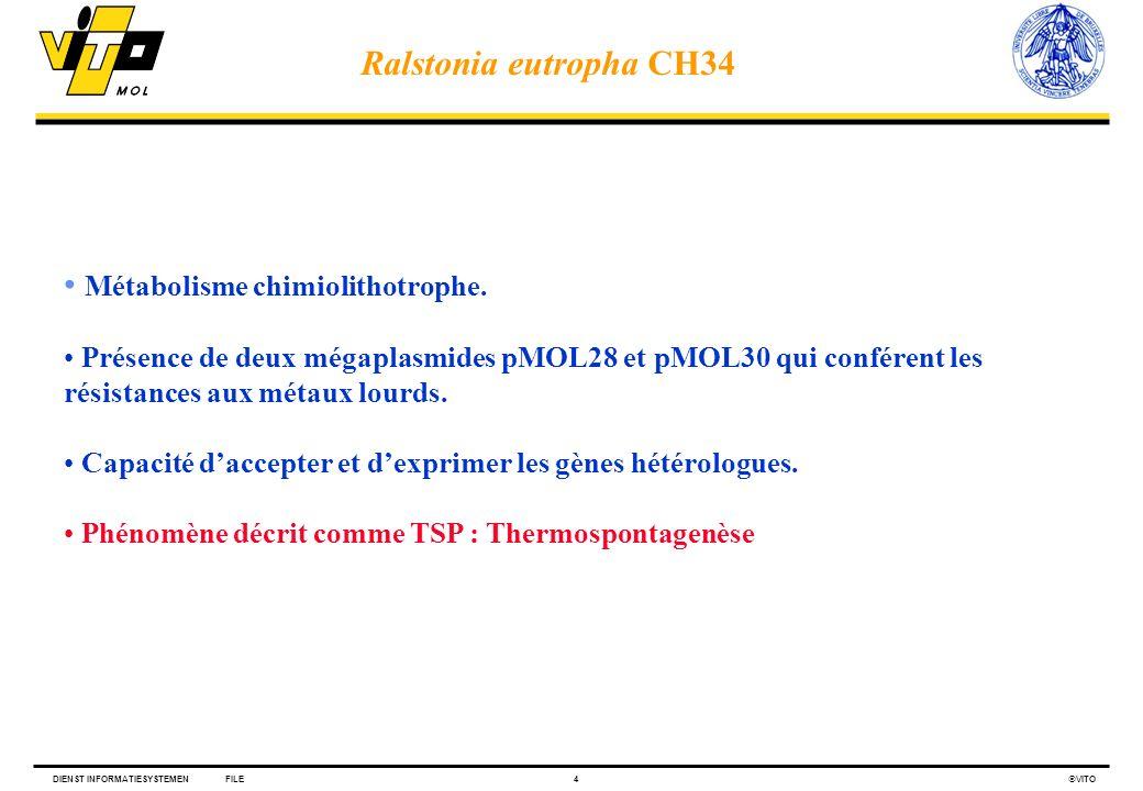 Métabolisme chimiolithotrophe.