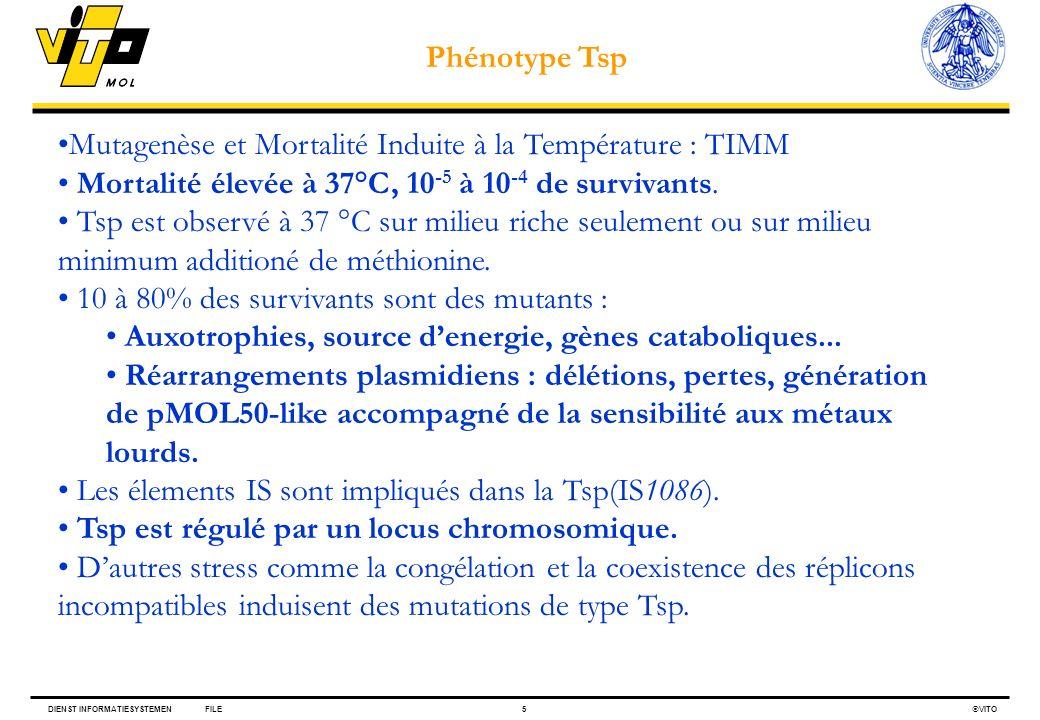 Phénotype Tsp Mutagenèse et Mortalité Induite à la Température : TIMM. Mortalité élevée à 37°C, 10-5 à 10-4 de survivants.
