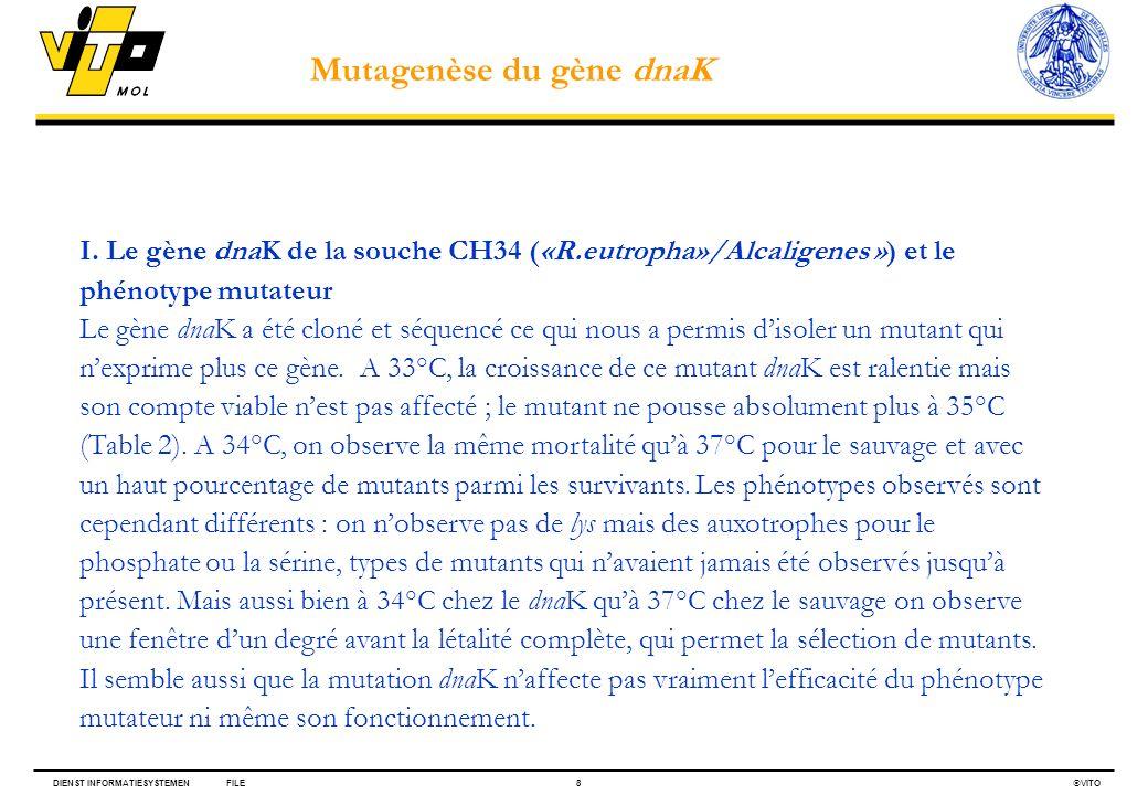 Mutagenèse du gène dnaK