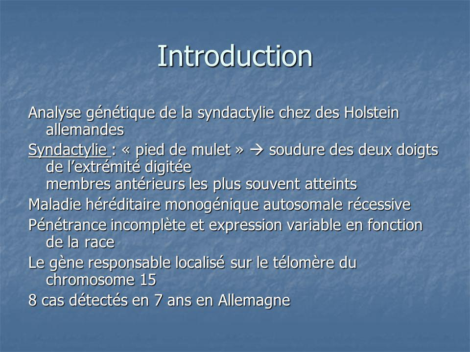 Introduction Analyse génétique de la syndactylie chez des Holstein allemandes.