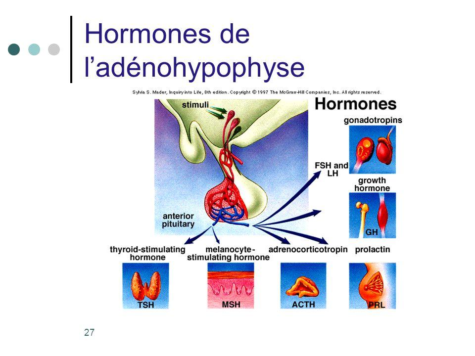 Hormones de l'adénohypophyse