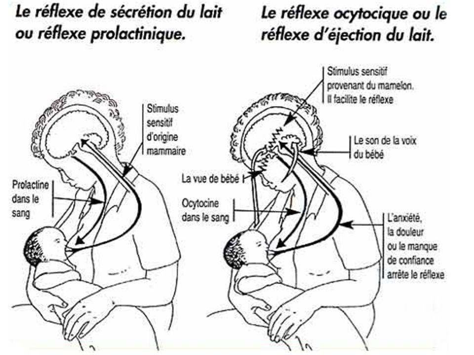 ACTION DE L'OCYTOCINE