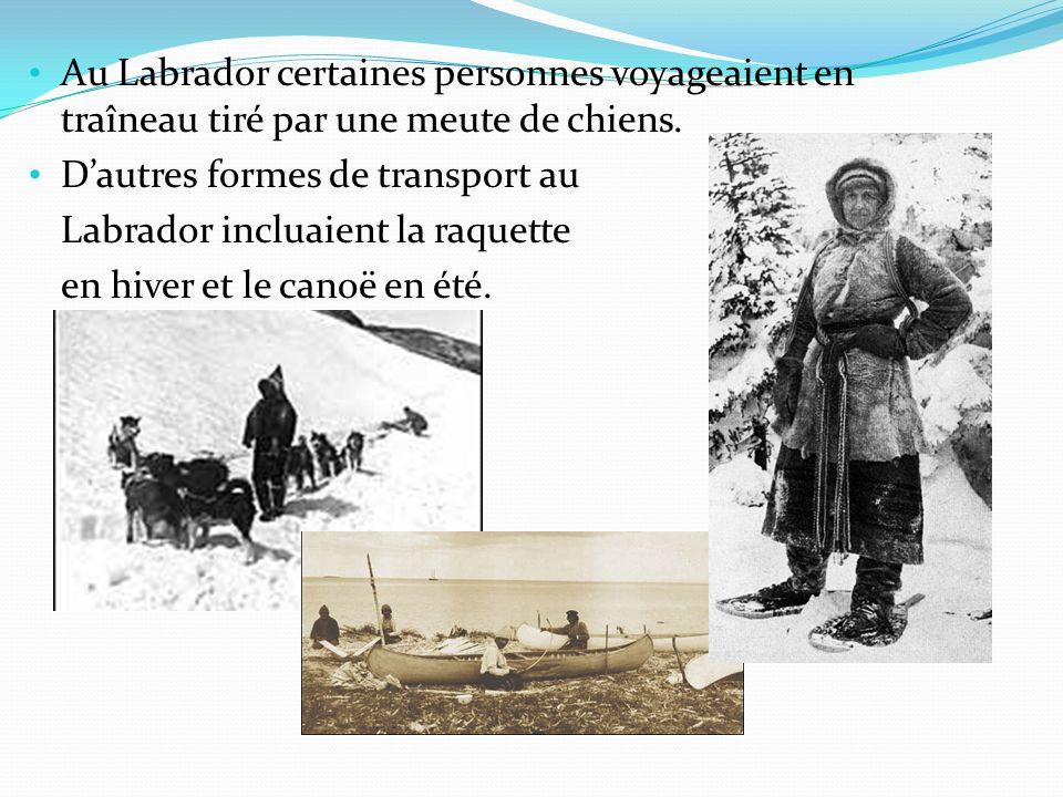Au Labrador certaines personnes voyageaient en traîneau tiré par une meute de chiens.