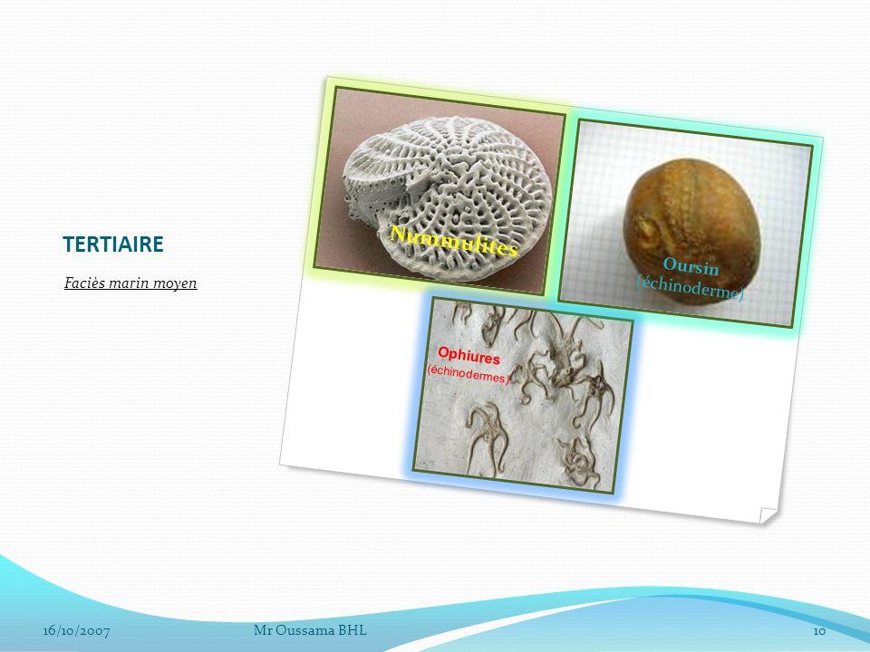 TERTIAIRE Nummulites Oursin (échinoderme) Faciès marin moyen Ophiures