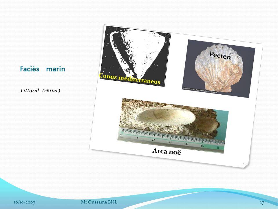 Faciès marin Pecten Arca noë Conus méditerraneus Littoral (côtier)