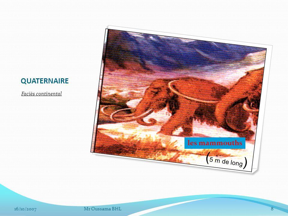 (5 m de long) QUATERNAIRE les mammouths Faciès continental 16/10/2007